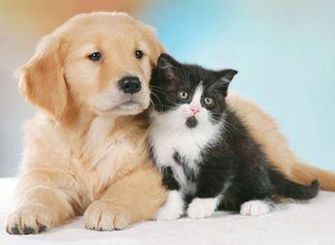 Picture for category PRODOTTI PER ANIMALI